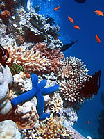 Coral Reef Ecosystem - Source Wikipedia