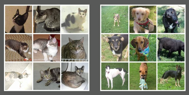 Discriminating Dogs and Cats