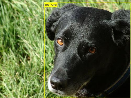 Example of Image Classification With Localization of a Dog from VOC 2012