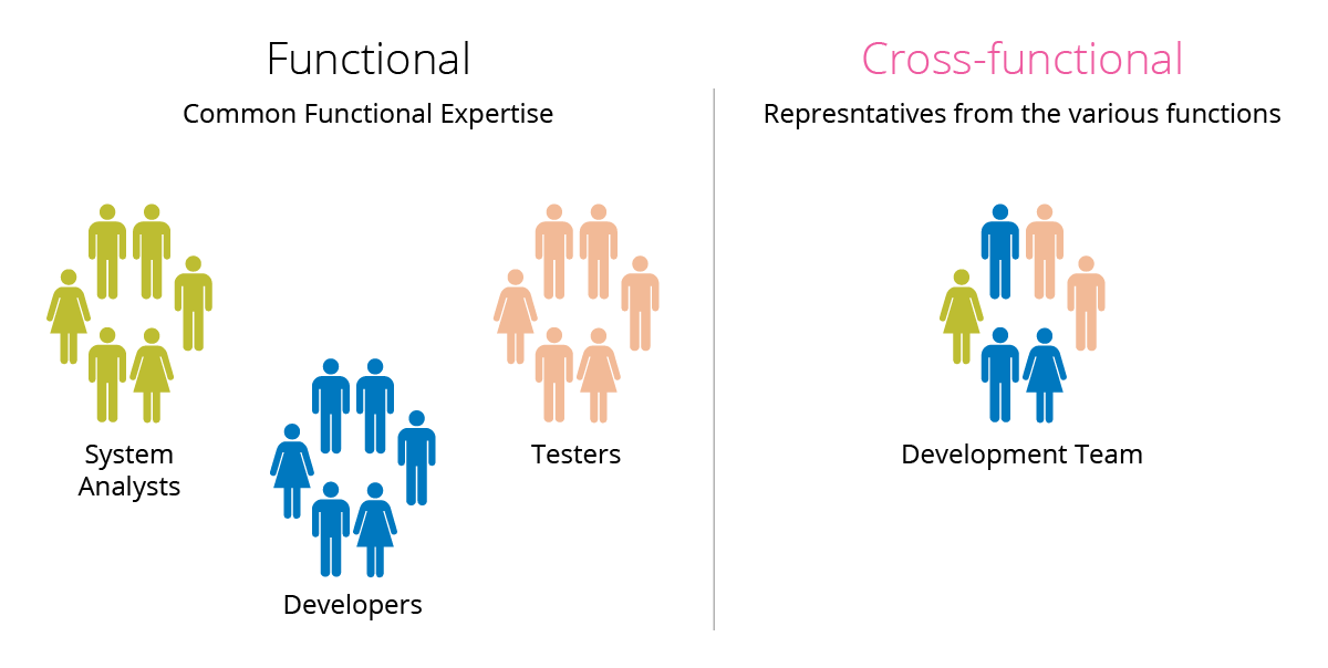 Functional and cross-functional teams