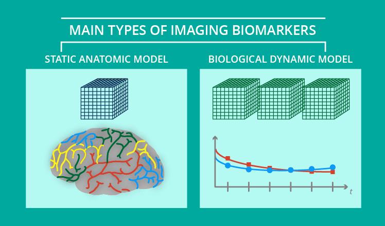 2 models of imaging biomarkers