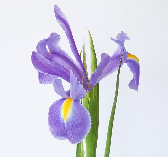 Iris Flowers Dataset